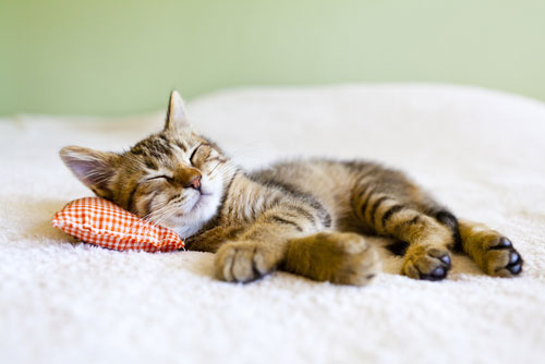 Пятна от кошачьей мочи